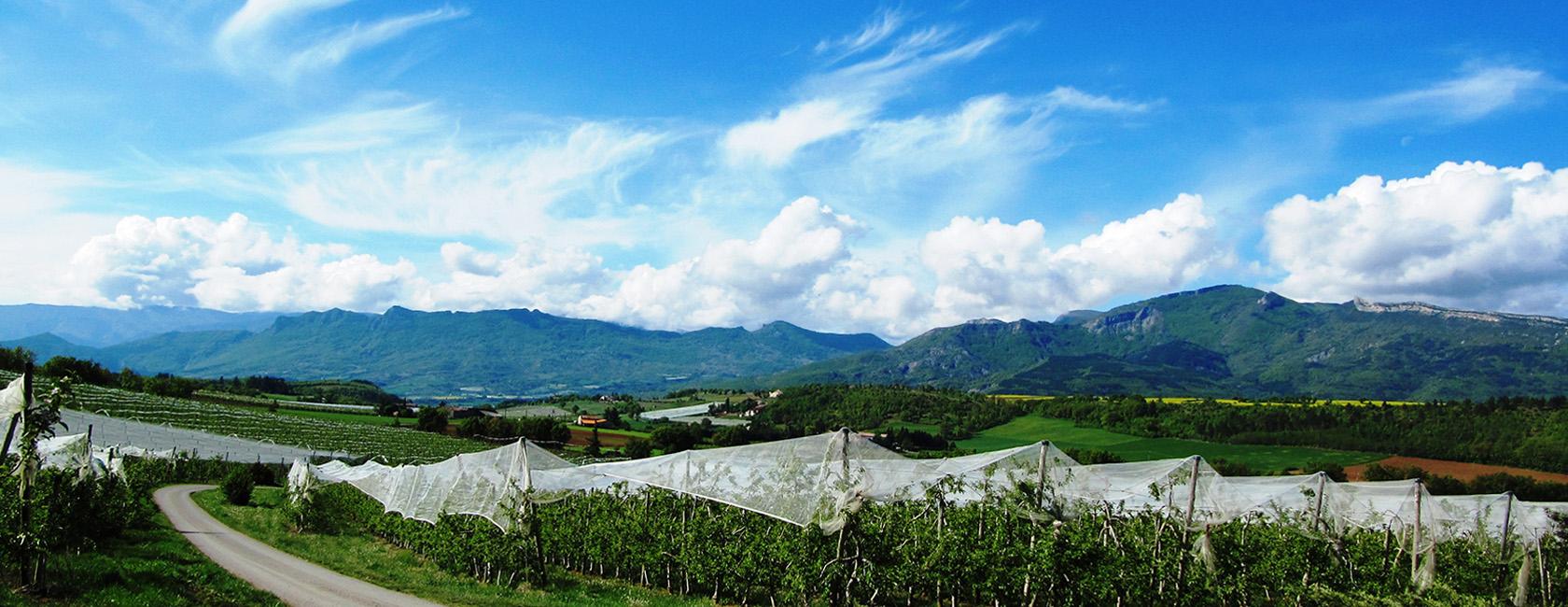 Découvrez nos produits, pommes & poires des Alpes